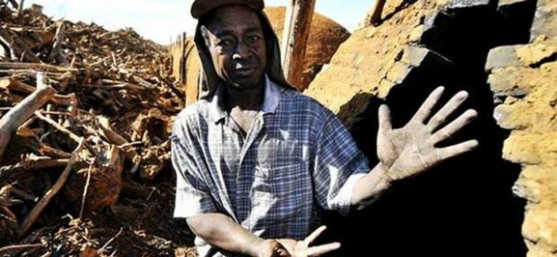 Governo brasileiro fiscaliza mas não pune trabalho escravo