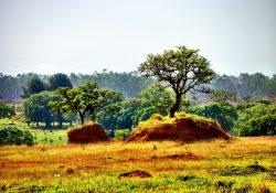 Campanha alerta para os impactos da destruição do Cerrado