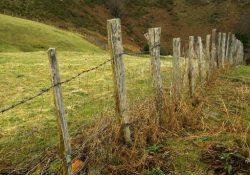 Conflito por terra deixa nove mortos em Colniza (MT)