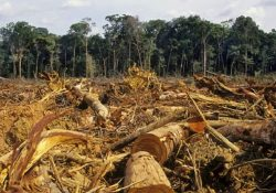 Respondendo ao chamado da floresta