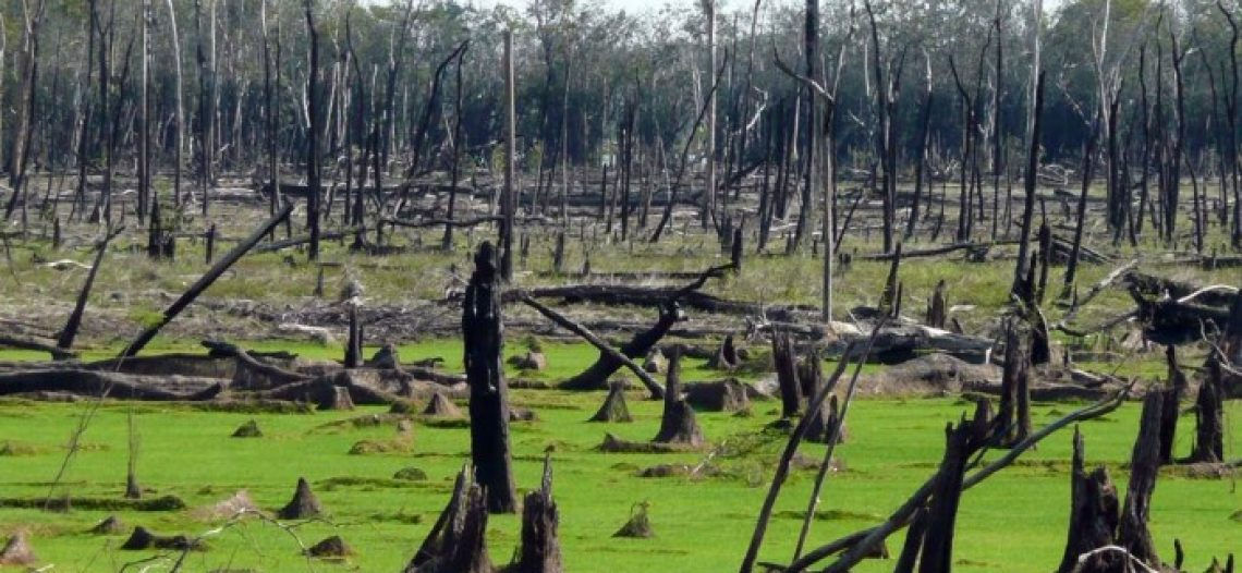 Amazônia e Brasil: pedidos de socorro