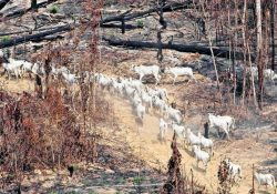 Fim da Reforma Agrária e grilagem de terras legalizada na Amazônia