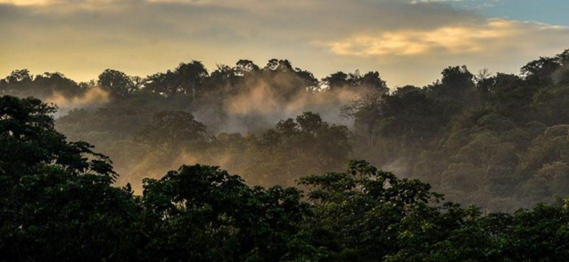Dia da Criação: Papa e Bartolomeu em defesa do ambiente e dos pobres