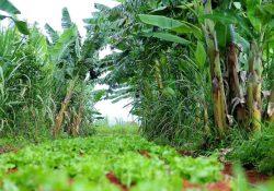 Agroecologia contra a desertificação